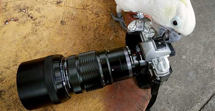 40_150mm_robinwong